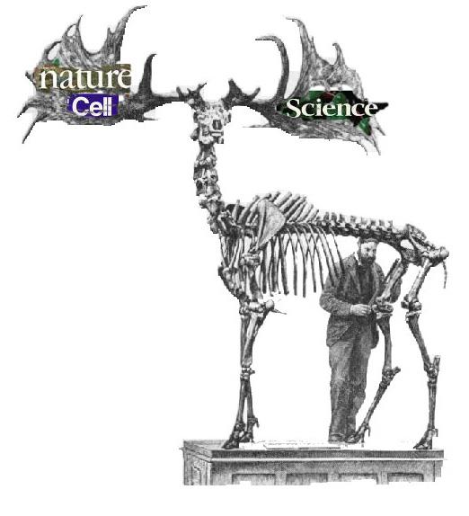 Irish Elk 2